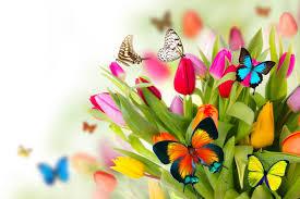 flowersandbutterflies